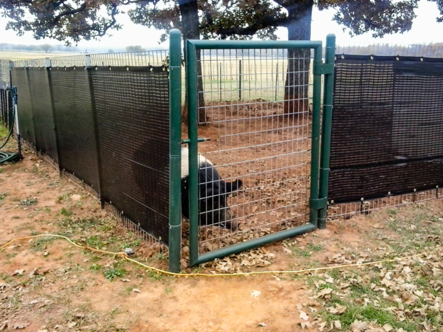 Creating a vision barrier or blocking the wind can be accomplished with ease making keeping that potbellied pig or hog a much better neighbor.