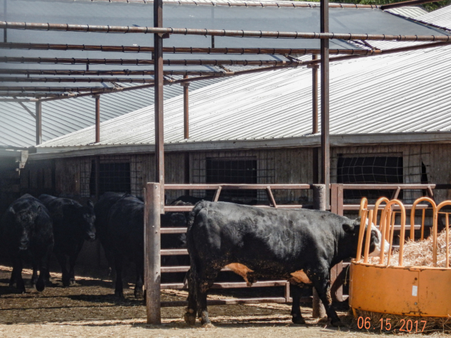 Weather protection shade screens help with climate control in arenas, barns, stalls, pens, and chutes by blocking wind, dust, rain, snow, and sun. Mesh shade tarps help livestock increase feed and water intake, reduce stress on beef cattle.  Screens are custom designed for a variety of uses indoor and outdoor. StrokeMaster the expertise to guide you from start to finish, ensuring that your order and installation is done right and made to last.
