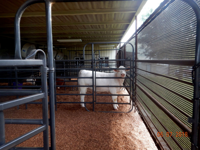 Weather protection screens help with climate control in stalls, reducing wind, dust, rain, snow, and sun.