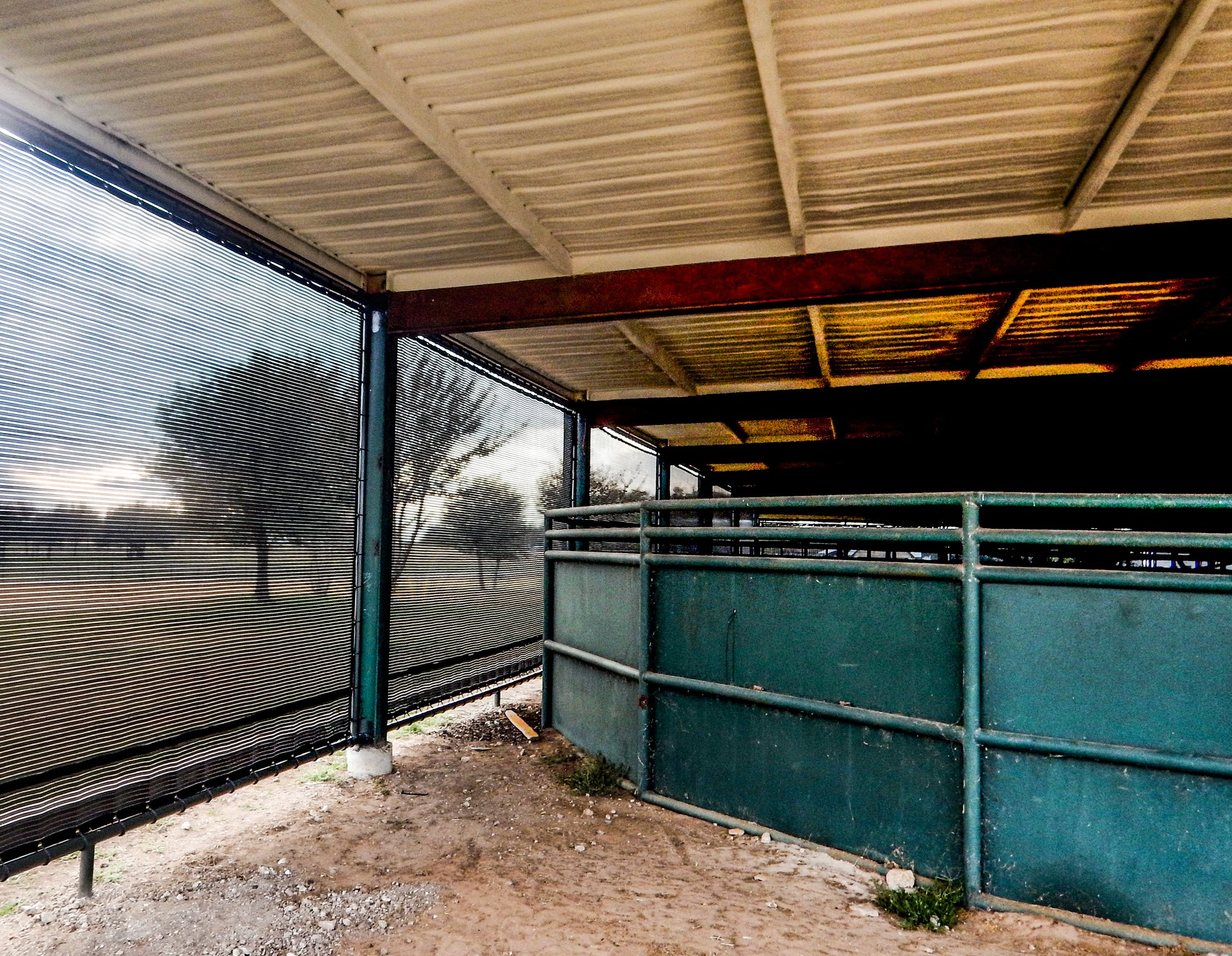 Cutting horse wind and shade protection in Texas